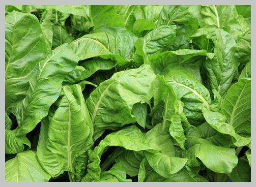 Verdure in foglia come prepararle
