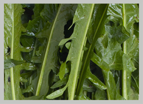 Guarda le nostre verdure in foglia