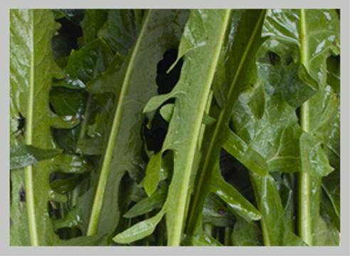 vai alla verdure in foglia