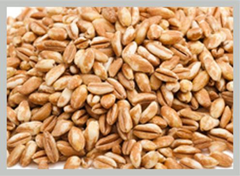 guarda i nostri legumi e cereali